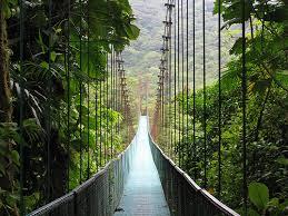 costa rica ponte nella foresta