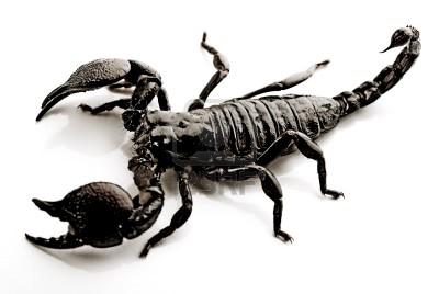 scorpione q