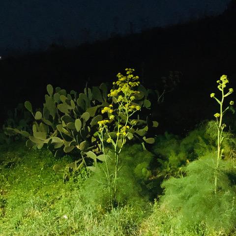 1-Ferula di notte